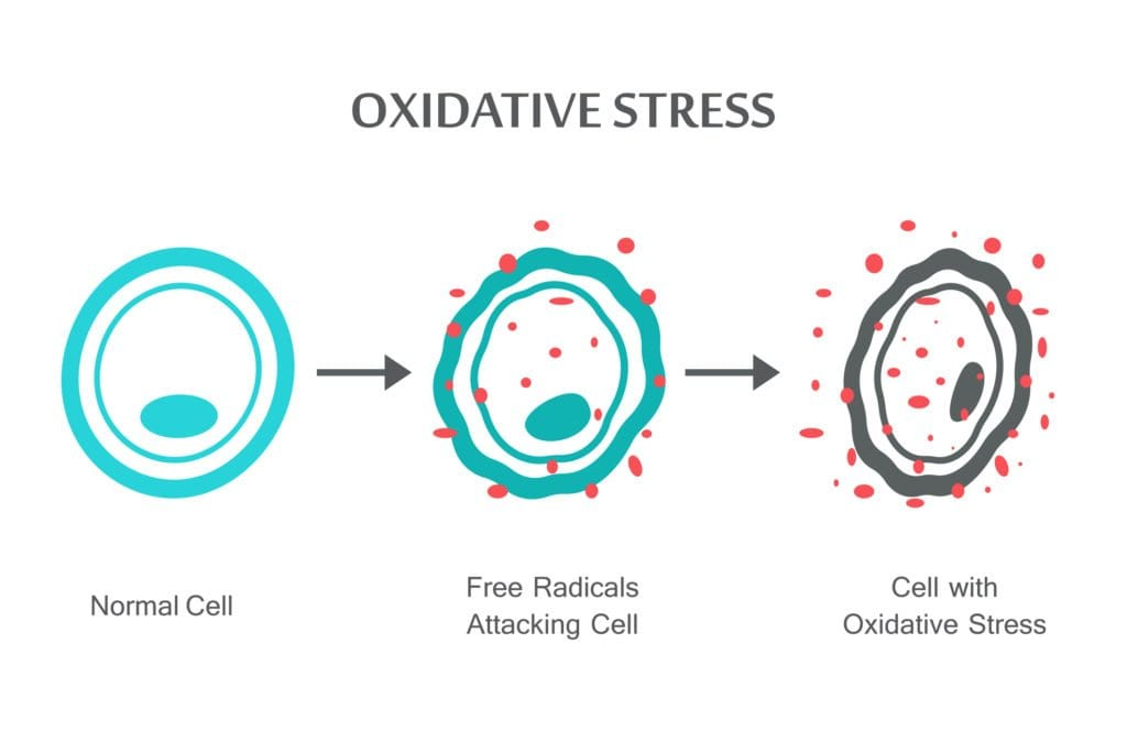 picture of a oxidative stress diagram